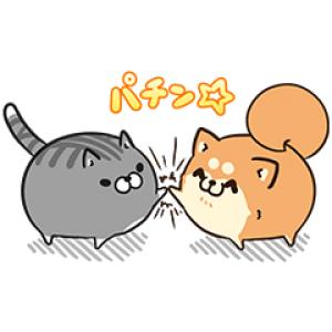 【無料スタンプ速報】ボンレス犬猫 x 便利アカウント スタンプ(2016年11月21日まで)